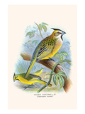 Green Cardinal Prints by F.w. Frohawk