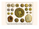 Gorgon's Head, Sand Dollars, Sea Urchins, Hatpin Urchin, Diadems Poster by Albertus Seba