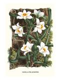 The Vanilla Orchid Giclée-Premiumdruck von Louis Van Houtte