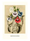 Gloxinias, Poster von Louis Van Houtte
