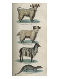 Animals Posters
