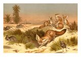 Desert Fox Prints by F.W. Kuhnert