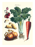 Vegetables; Celery, Strawberry, Onion, Carrot, and Potato Prints by Philippe-Victoire Leveque de Vilmorin
