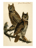 Great Horned Owl Art by John James Audubon