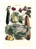 Vegetables; Cucumber, Cabbage, Eggplant, Potato, and Beet Prints by Philippe-Victoire Leveque de Vilmorin