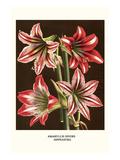 Narzissenlilien Giclée-Premiumdruck von Louis Van Houtte