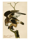 Rough Legged Buzzard Prints by John James Audubon