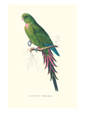 Roseate Parakeet - Polytelis Swainsoni Prints by Edward Lear