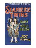Siamese Twins - Reprodüksiyon