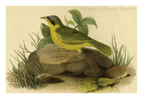 Delafields Ground Warbler Prints by John James Audubon