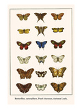 Butterflies, Caterpillars, Pearl Charaxes, Autumn Leafs, Prints by Albertus Seba