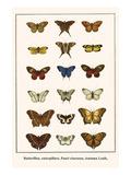Butterflies, Caterpillars, Pearl Charaxes, Autumn Leafs, Posters by Albertus Seba