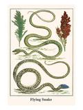 Flying Snake Prints by Albertus Seba