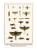 Crane Flies, Dragonflies, Caddis Flies, Wasp, Predaceous Diving Beetles, Mayflies, etc. Plakater av Albertus Seba