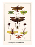 Grasshoppers, Crickets and Katydids Prints by Albertus Seba