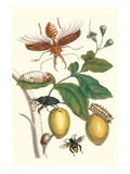 Genip Tree with Palm Weevil, a Long Horned Beetle and an Orchid Bee Posters by Maria Sibylla Merian