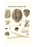 Fossil Tortoise, Crocodile and Fish Posters by James Parkinson
