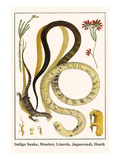 Indigo Snake, Monitor, Lizards, Jaguarondi, Heath Prints by Albertus Seba