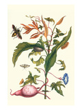 Sweet Potato with Melonworm and Giant Big-Legged Bug Kunst von Maria Sibylla Merian