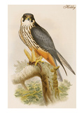 Hobby Posters by John Gould