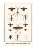 Walking Sticks, Praying Mantids, Water Bugs and Water Beetle Posters by Albertus Seba