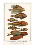 Red Lionfish, Brown Scorpionfish, Frogfish, Hooknose and Flying Gurnard Print by Albertus Seba