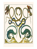 Serpents, Lizards and Birds Premium Giclee Print by Albertus Seba