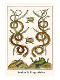 Snakes and Frogs Africa Prints by Albertus Seba