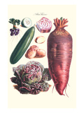 Vegetables; Raddish, Cabbage, Potato, and Cucumber Posters by Philippe-Victoire Leveque de Vilmorin