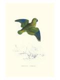 Collared Parakeet - Bolbopsittacus Lunulatus Poster von Edward Lear