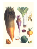Various Vegetables Prints by Philippe-Victoire Leveque de Vilmorin