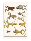 Frogs Prints by Albertus Seba