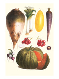Vegetables: Melon, Purple Carrot, Cherry Tomatoes, Onions, Turnip, Leek Prints by Philippe-Victoire Leveque de Vilmorin