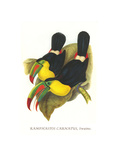 Rainbow or Keel Billed Toucan Affiches par John Gould
