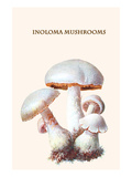 Inoloma Mushrooms Posters by Edmund Michael