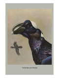 Thick Billed Raven Posters by Louis Agassiz Fuertes