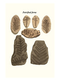 Petrified Ferns Prints by James Parkinson