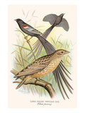 Long Tailed Whyah Posters by F.w. Frohawk