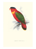 Black-Ccapped Lory - Lorius Domicella Art by Edward Lear