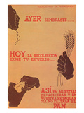Yesterday You Sowed, Today the Harvest Demands Your Effort Posters by  Subsecretariat of Propaganda