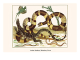 Asian Snakes, Monitor, Peru Prints by Albertus Seba