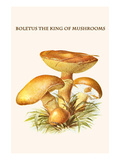 Boletus the King of Mushrooms Print by Edmund Michael