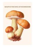 Boletus the King of Mushrooms Plakat autor Edmund Michael