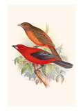 Scarlet Tanager Prints by F.w. Frohawk