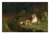 Tiger and Cubs Posters by Jean Leon Gerome