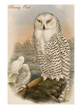 Snowy Owl Poster by John Gould