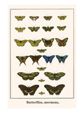 Butterflies, Mormons, Print by Albertus Seba