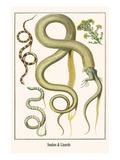 Snakes and Lizards Kunst von Albertus Seba
