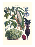 Vegetables; Corn, Cabbage, Beet, Onion, and Beans Prints by Philippe-Victoire Leveque de Vilmorin