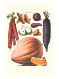 Vegetables; Carrot, Potato, Onion, and Pumpkin Prints by Philippe-Victoire Leveque de Vilmorin